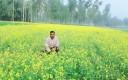farmer ariful boda